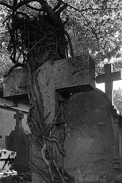 Photograph from a cemetery